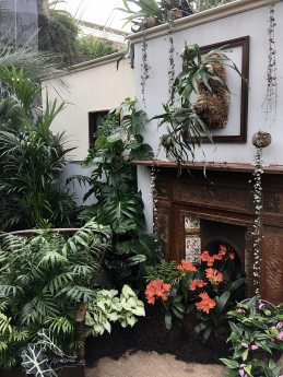 Chair and fireplace with houseplants and framed staghorn