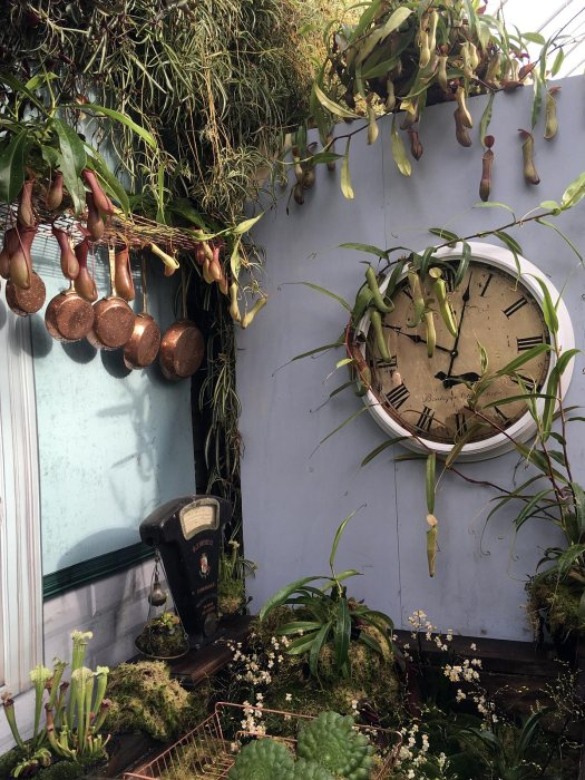 Copper pans, antique scales and clock with houseplants