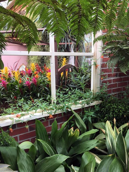Bromeliad covered bed, viewed through a window