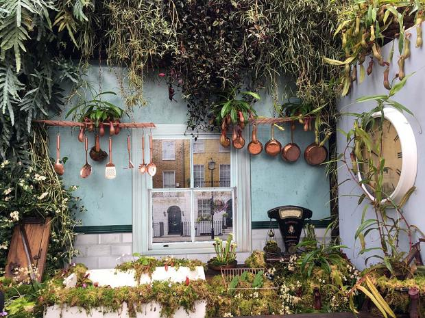 A kitchen with houseplants on every surface