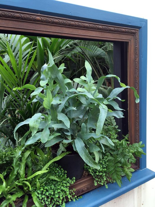 Plants inside a picture frame on a windowsill