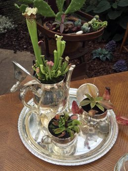 Teapot, sugar bowl and milk jug planters