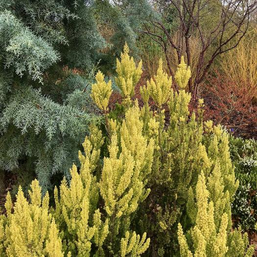 Winter border with evergreen and deciduous trees