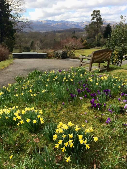 Bench among daffodils facing towards distant mountains