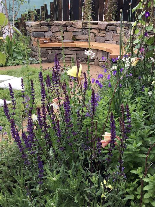 Salvia nemorosa 'Caradonna' in the Mandala Mindfulness Garden