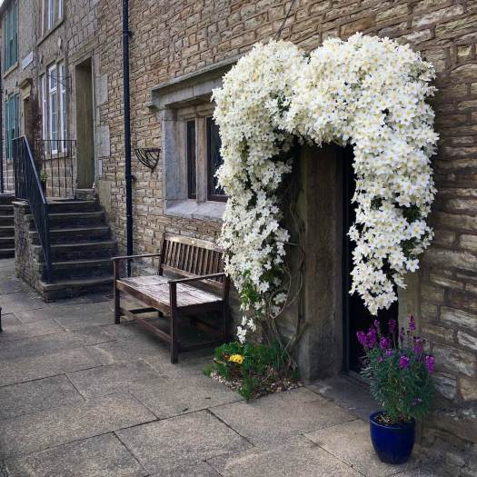 Clematis forming a heart shape round the door of a stone terraced house