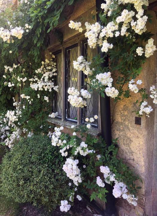 Rambling roses framing a window at Cothay Manor