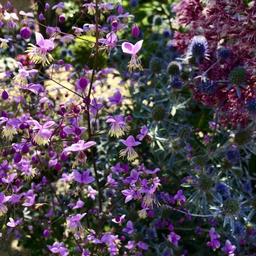 Dappled light seen through flowers