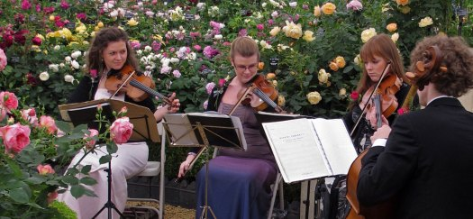 String quartet on the David Austin Roses display at Chelsea