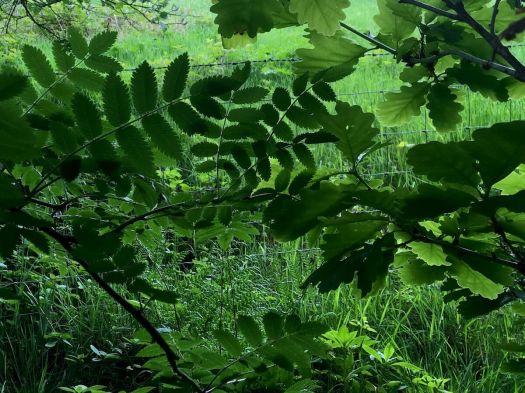 Sunnyhurst Wood foliage