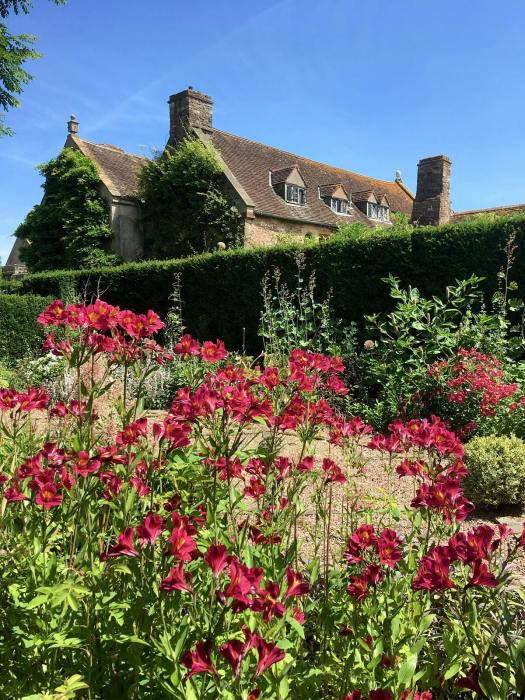 Red Alstroemeria at Cothay Manor