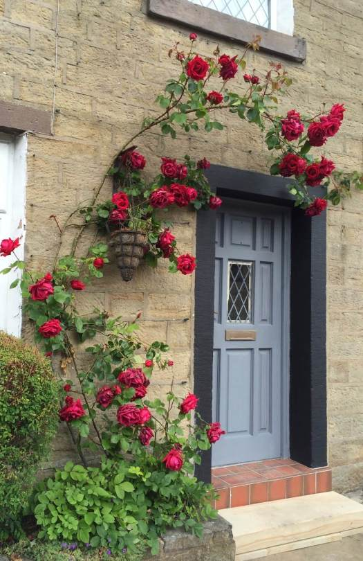 Red roses round the door
