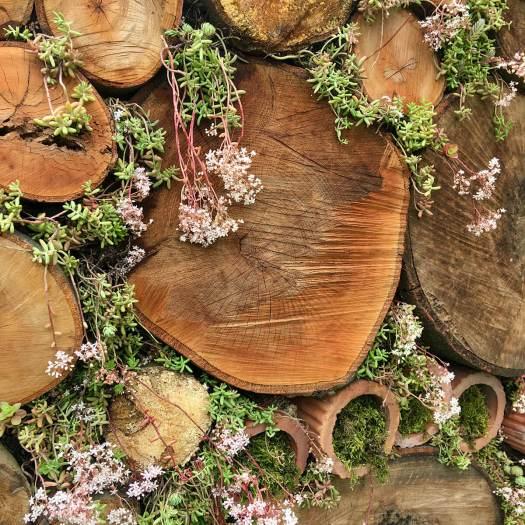 Sedums grown in the gaps between logs