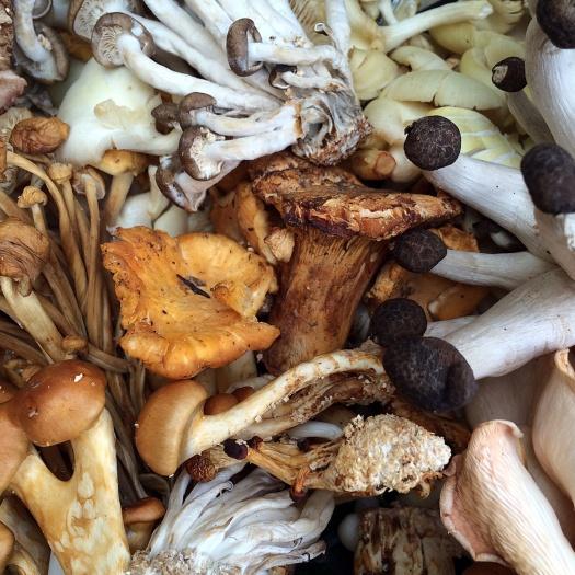 Unusual edible mushrooms