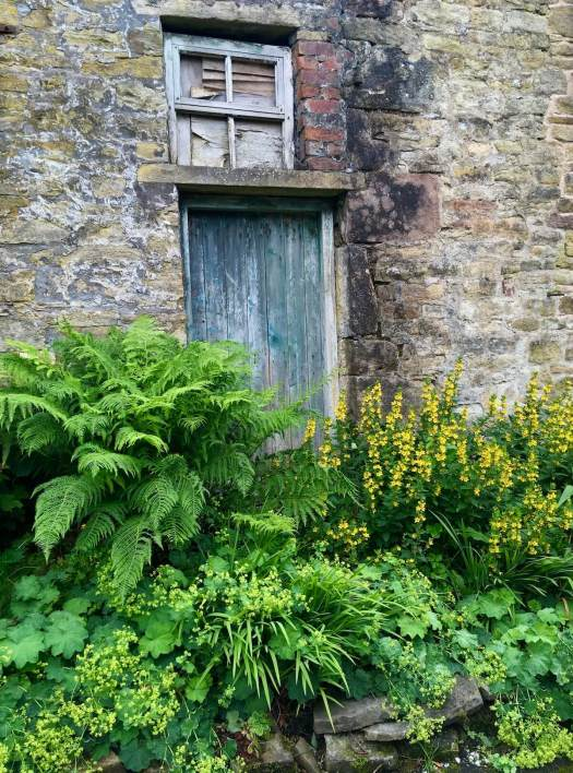 Old turquoise doorway surrounded by ferns and plants