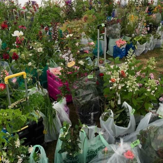 Plant creche at a flower show