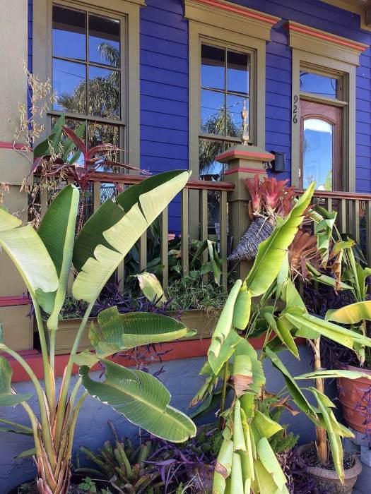 Purple house with banana trees