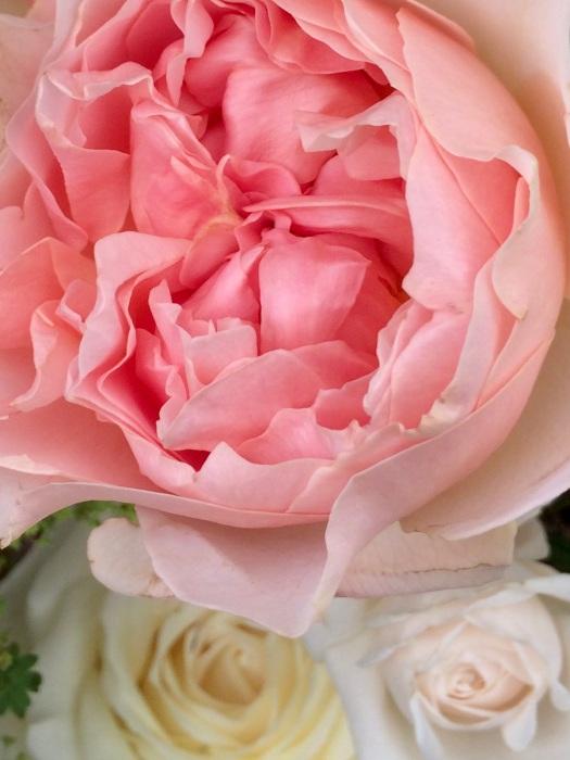 Peach, cream and ivory roses