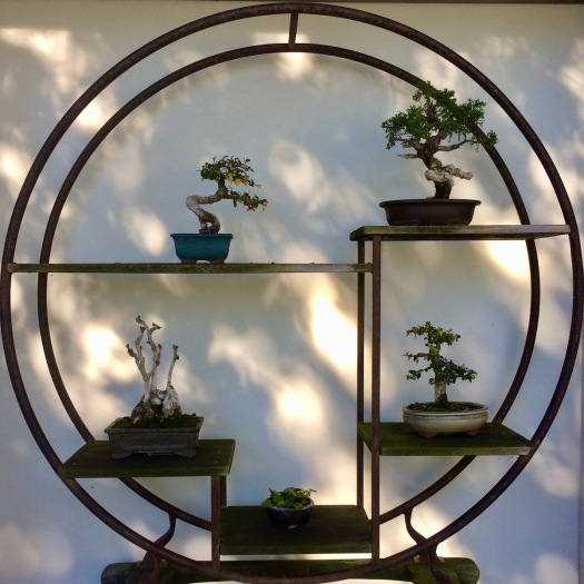 Circular stand with bonsai trees