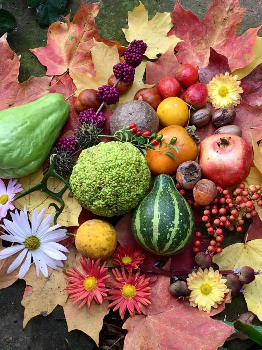 Autumn leaves with fruits, nuts and daisies