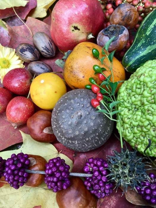 Produce gathered in Autumn in Jackson MS