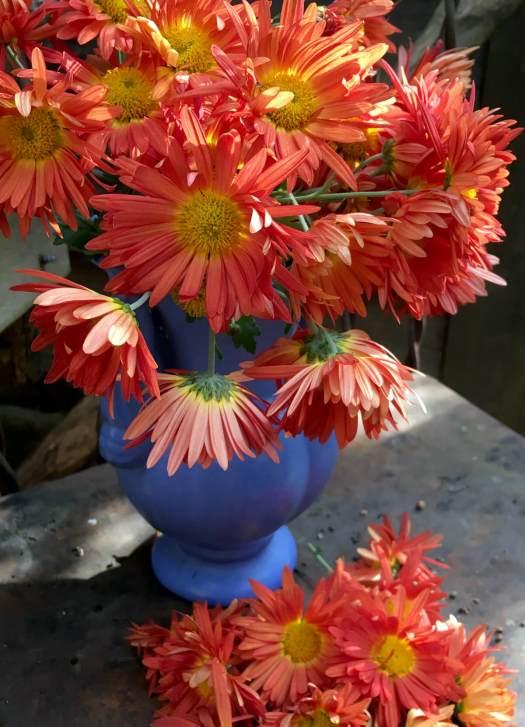 Orange heritage mums in a vase