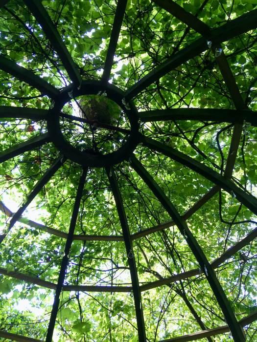 Looking upwards into a garden pergola frame