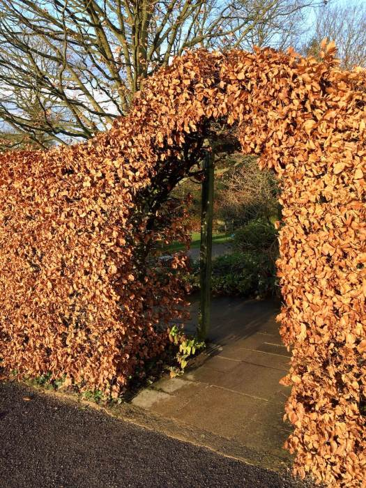 Arched entrance cut in a beech hedge