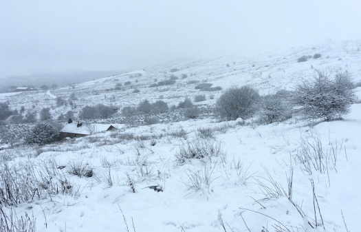 Farmhouse half hidden on snowy moorland