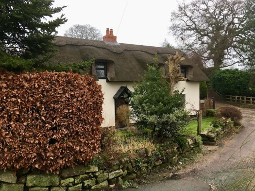 Thatched cottage with beech hedge
