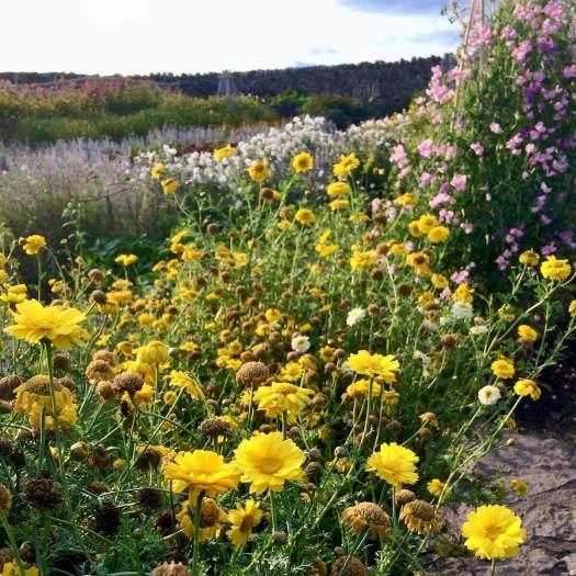 Cutting garden at Lindisfarne Island
