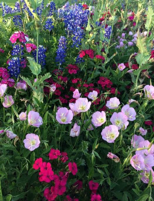 Flower border in April