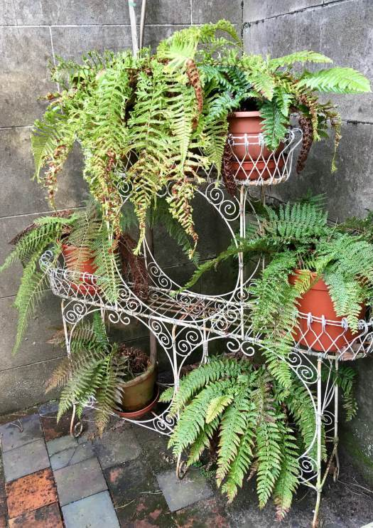 Decorative metal plant stand with ferns