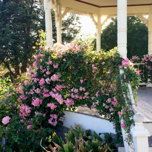 Rambling roses trail over the gazebo railings