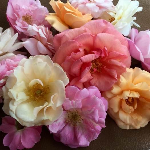 Shrub and antique roses