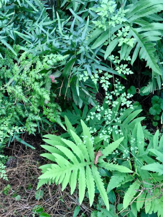 Greenery with contrasting leaves