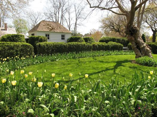 Garden with a ring of tulips at Colonial Williamsburg