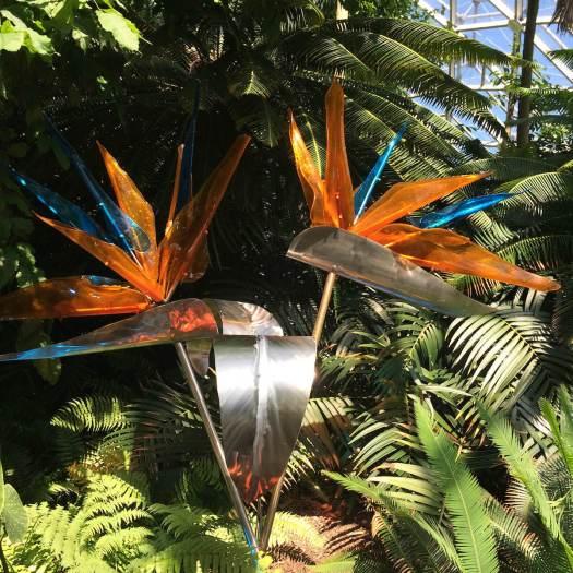 Bird of Paradise at MOBOT