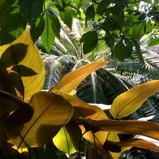 The leaves of tropical plants in sunlight