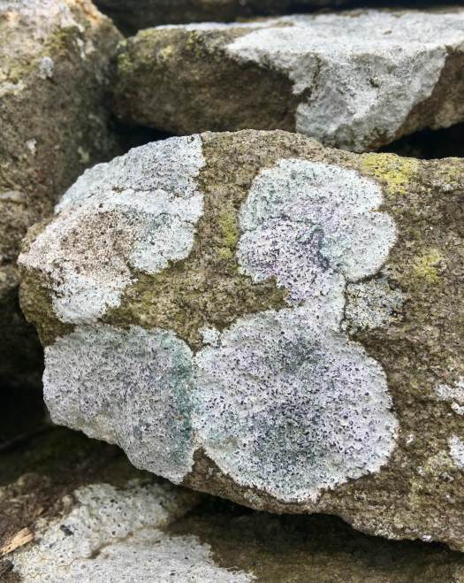 Flat, powdery lichens with hints of lilac, aqua, brown and yellow