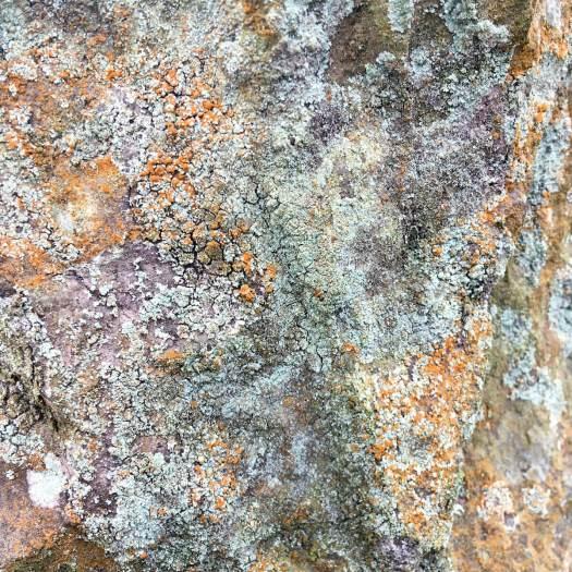 Powdery and crusty lichens