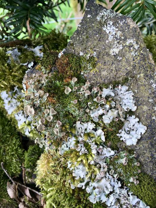 Garden of mosses and lichens