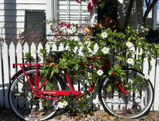 Bicycle covered in a flowering vine