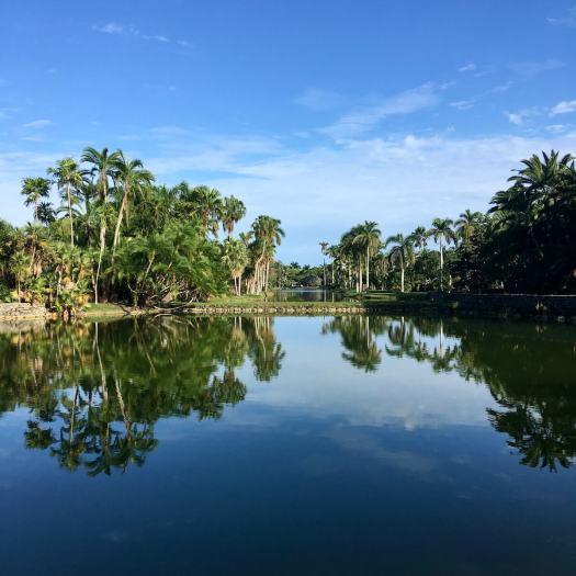 Fairchild Tropical Botanic Garden lake with palm trees