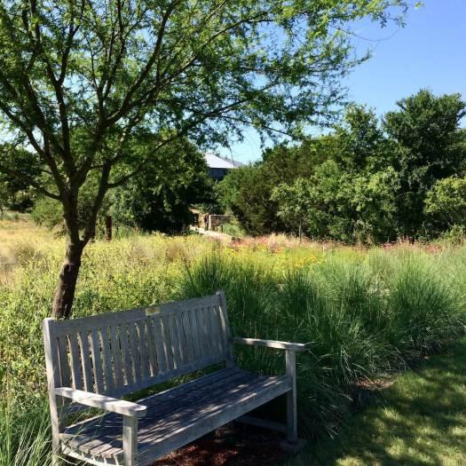 Garden bench under a tree at Scampston Hall Gardens