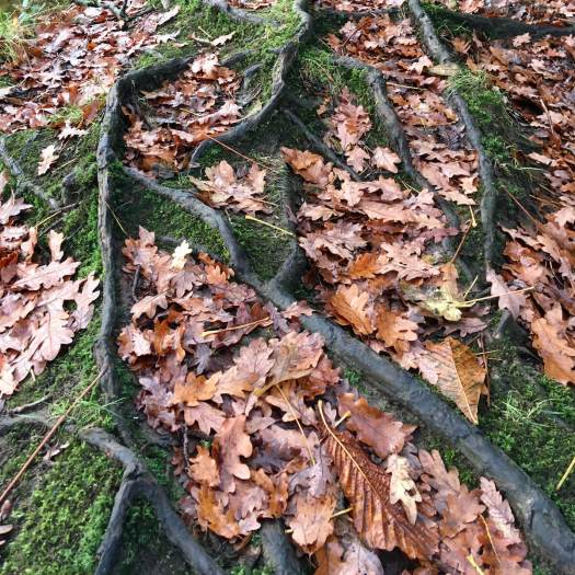 Mossy roots with fallen leaves