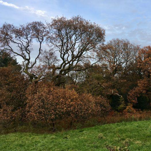 Oak in November