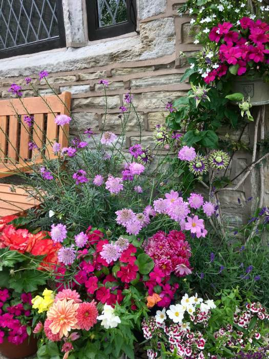 Pavement garden with lots of flowers