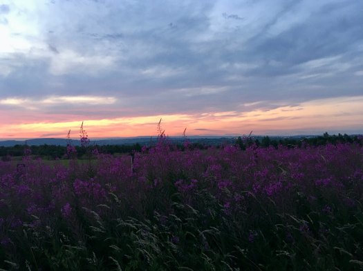 Rosebay willowherb and grasses with sunset