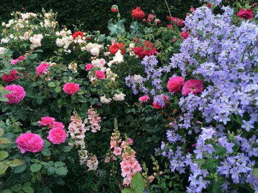 Roses with bellflower, snapdragon and poppy
